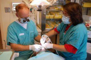 edmonton dentist